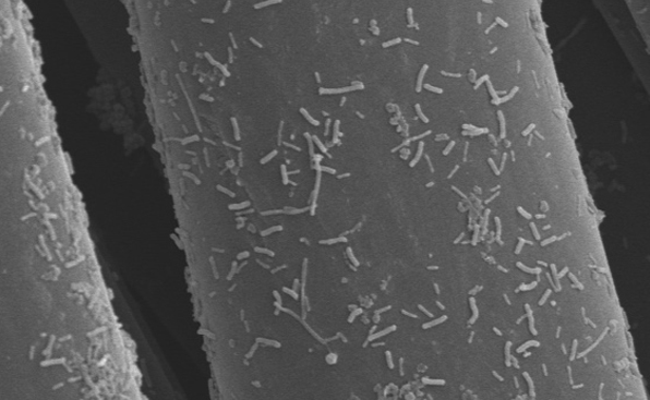 微生物を用いたCO2<br>変換・技術
